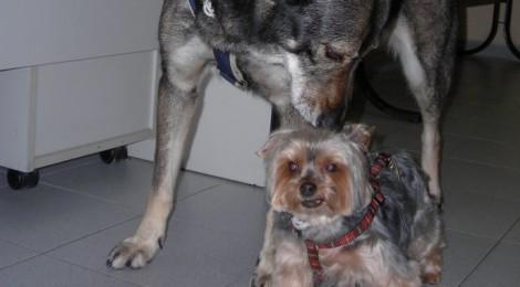Recomendaciones para el cuidado del perro