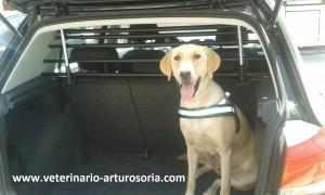 Medidas de seguridad para viajar con animales en el coche