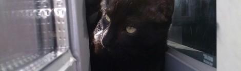 Vigilar a los gatos en las ventanas