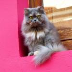 gato_en_la_ventana_1_by_toniteror-d86dpy8
