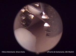 Resolución artroscópica del proceso coronoides fragmentado